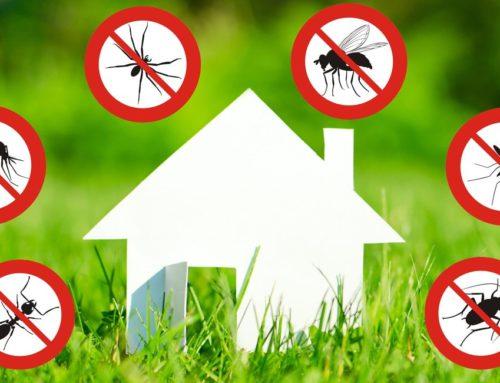 Дезинфекция насекомых в Серра-ди-Маре